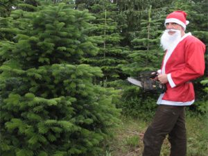 weihnachtsbaum-faellen