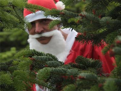weihnachtsbaum-premium