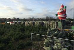 weihnachtsbaum-schlagen01