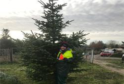 weihnachtsbaum-schlagen03